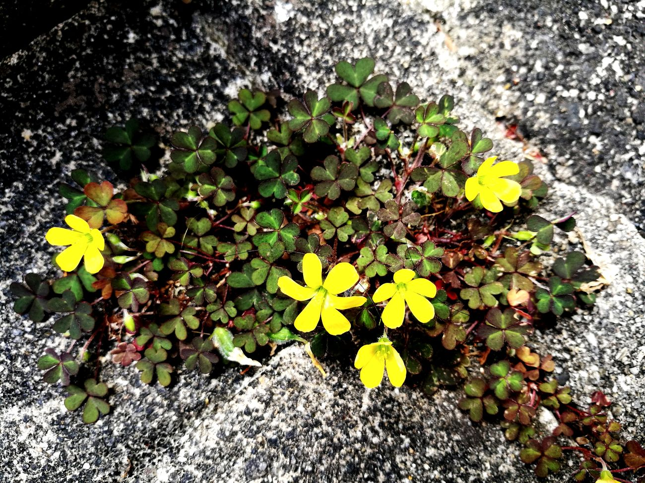 Flower Growth Yellow Plant Fragility Petal Nature High Angle View Flower Head Outdoors Day Beauty In Nature No People Leaf Freshness Blooming Close-up