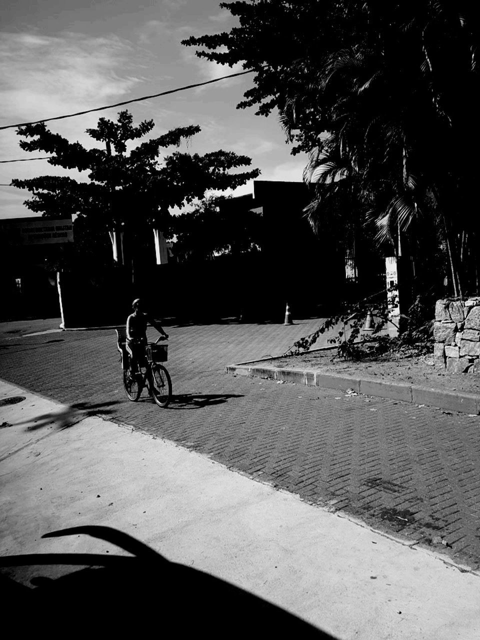 bicycle, tree, transportation, land vehicle, mode of transport, cycling, outdoors, palm tree, day, real people, men, sunlight, built structure, shadow, sky, one person, architecture, building exterior, nature, people