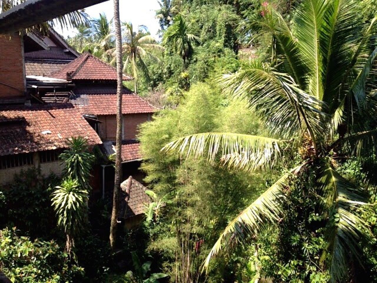 Landscape Plants Tree Growth Nature From My Point Of View Outdoors Beauty In Nature Color Portrait EyeEm Nature Lover EyeEm Gallery Light And Shadow Colors Green Travel Ubud Bali INDONESIA
