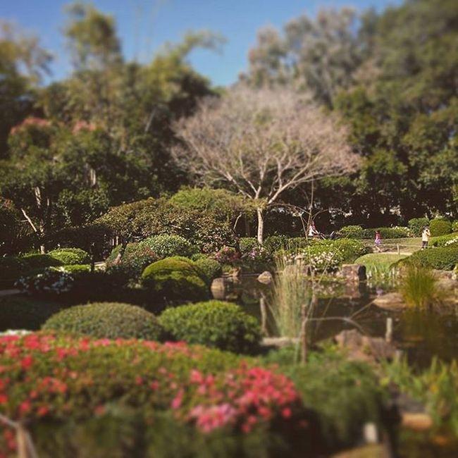Japanese gardens Brisbane Nature Outdoors Plants Japanesegarden Beautiful Brisbane Brisbanebotanicgardens Tiltshift