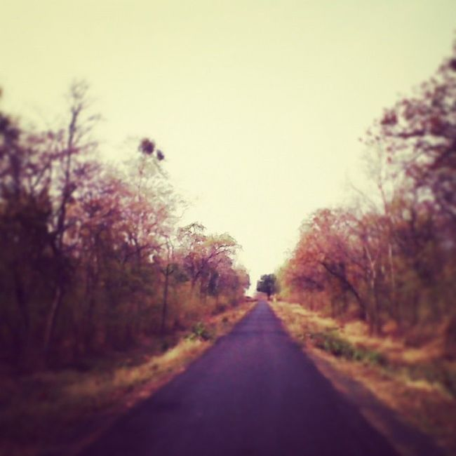 Country roads take me home. On my way to Tadoba Andhari Tiger Reserve Chandrapur