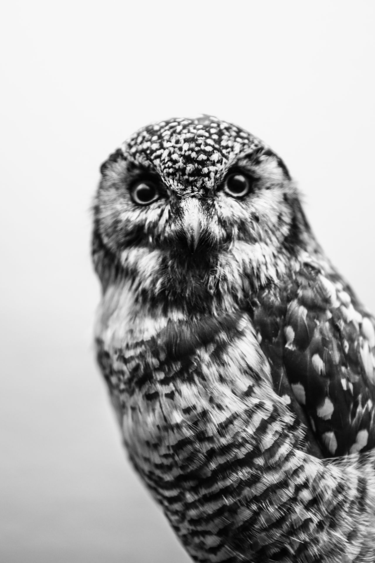 Animal Themes Animal Wildlife Animals In The Wild Beak Bird Bird Of Prey Close-up Day Nature No People One Animal Outdoors Owl Owl Eyes