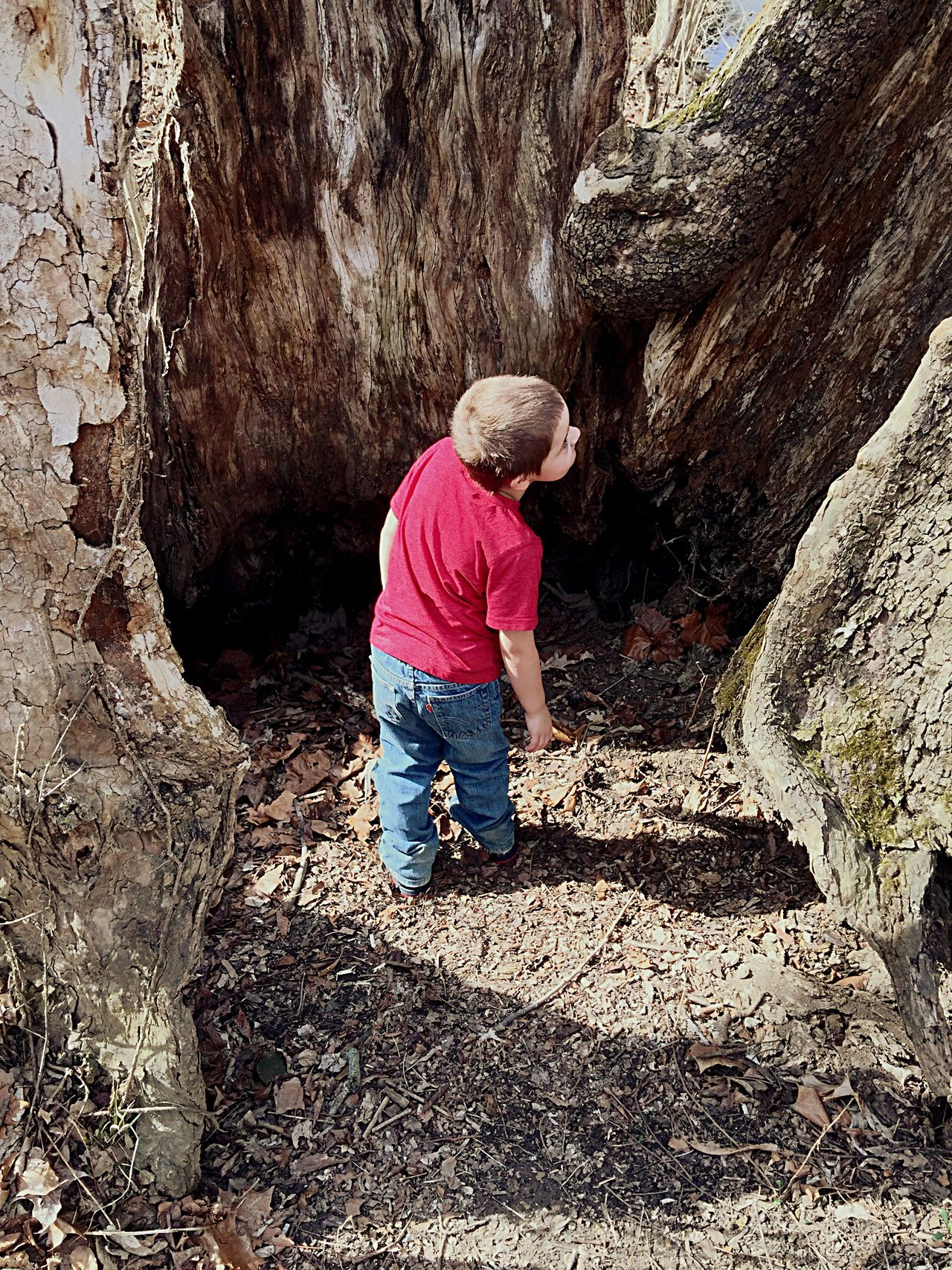 Inside of an old tree. The other half is still alive. I took my camera up inside while filming a video and found living animals coming out at me. My Grandson thought that was very funny. Love Enjoying Life Nature Is My Best Friend Tadaa Community EyeEm Nature Lover Hugging A Tree Tree Nature Nature_collection Eye4photography  From My Point Of View Check This Out Notes To Leave Behind Nature Photography Naturelovers EyeEm Best Shots - Nature Tree_collection  Tree Trunk Portrait Of A Toddler Light And Shadow