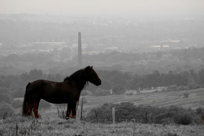 Steam Power Horse With Chimney Horse Chimney Hanging Out Check This Out Relaxing Enjoying Life Beautiful Horse Lancashire Nature