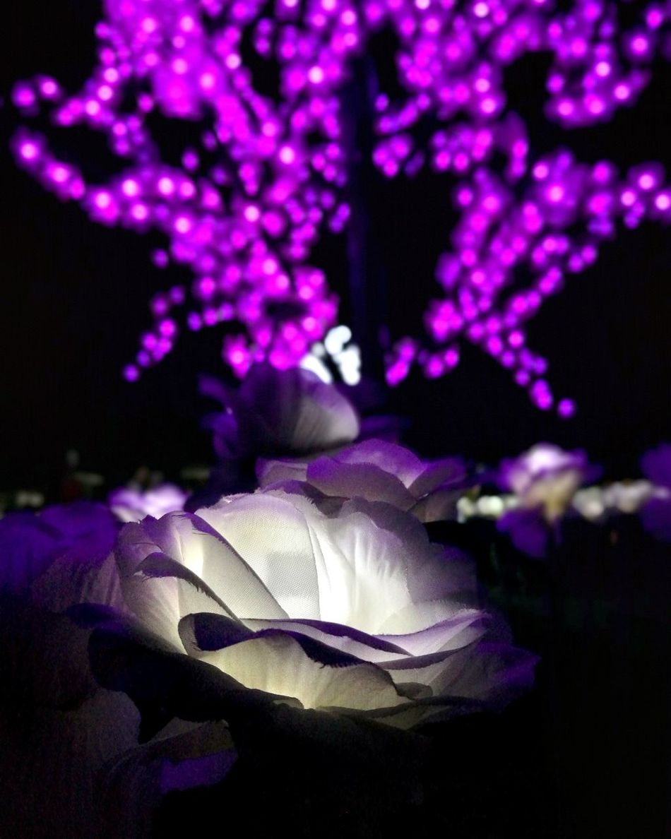 My enchanted rose🌹