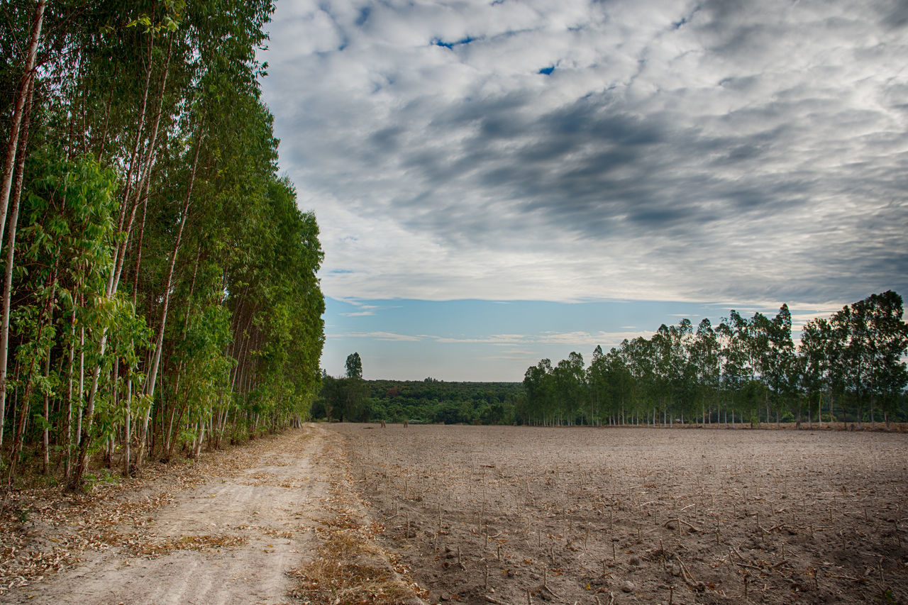 tree, sky, tranquil scene, landscape, scenics, nature, field, cloud - sky, tranquility, beauty in nature, growth, agriculture, rural scene, no people, outdoors, the way forward, day, plant