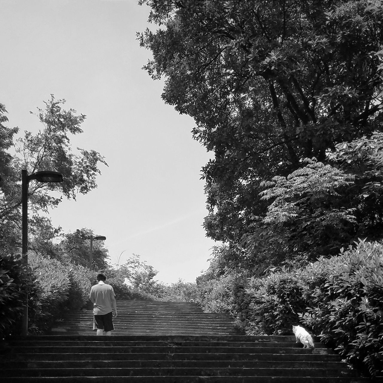 Tree Sky Day Outdoors Nature Steps Man China Campus Cat Blackandwhite Low Angle View  Jiangsu Province Snapshot Snapseed PhonePhotography The Street Photographer - 2017 EyeEm Awards Live For The Story