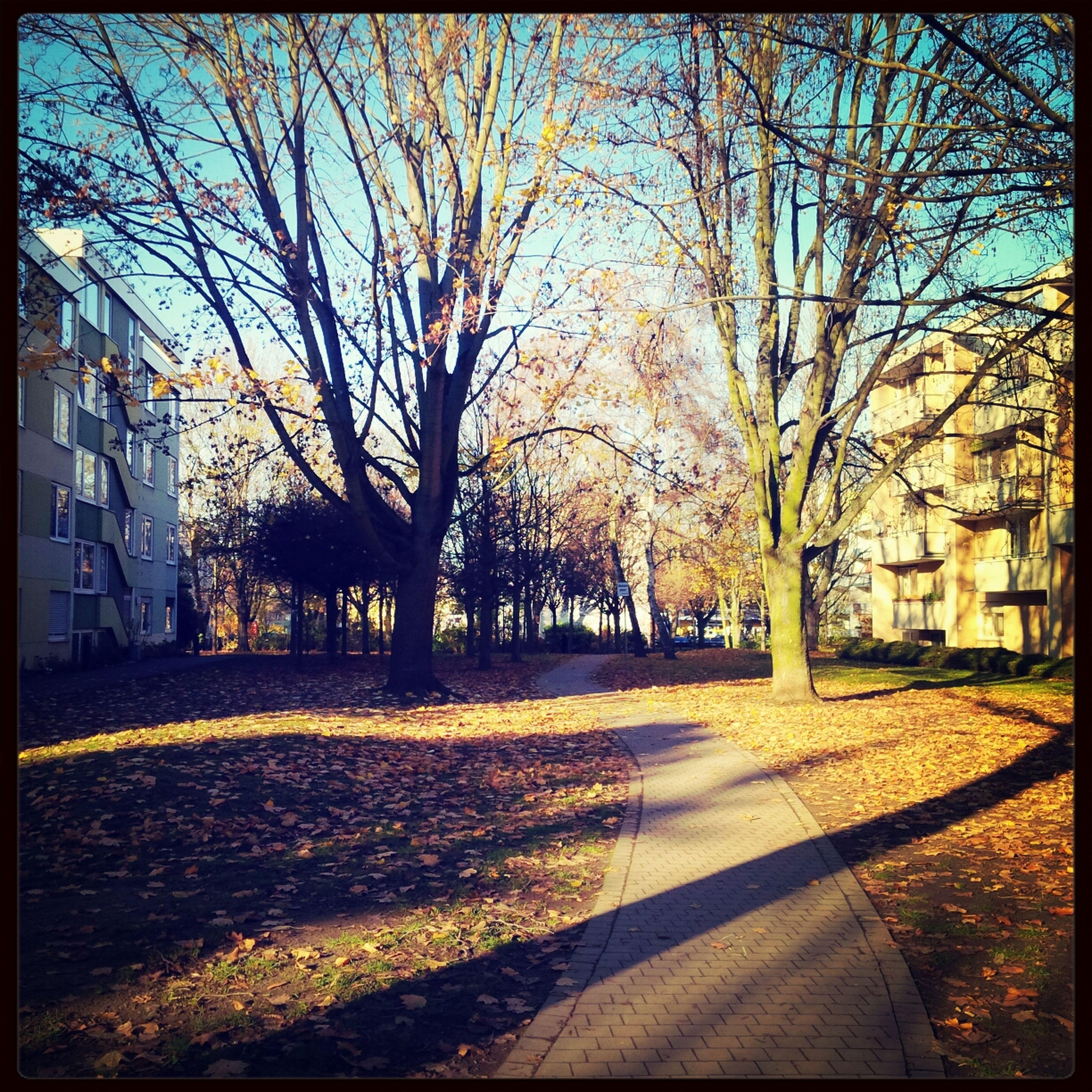 Autumn November On My Way Home