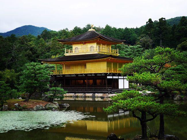Kyoto Kyoto,japan Kyotojapan Kyoto City Kinkakuji Kinkakuji Temple Kinkakuji Temple Of Japan Kinkaku-ji Golden Pavilion Japanese Temple Japan Photography Japanese  Japan