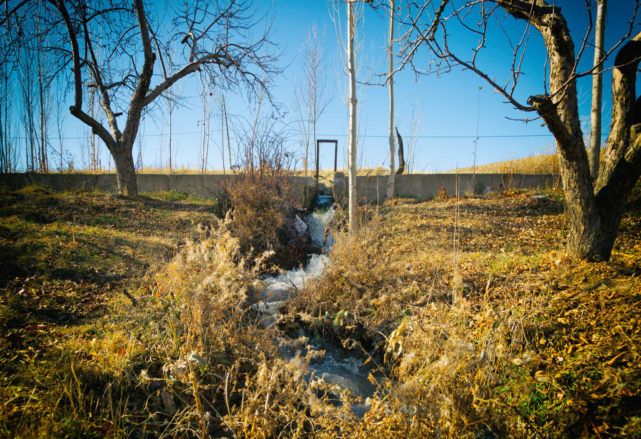 Spring Water Babbling Brook Day Dried Plant Field Fresh Water Freshness Grass Grassy Growth Icy Icycles Landscape Nature No People Outdoors Plant Running Water Sky Spring Water Tree