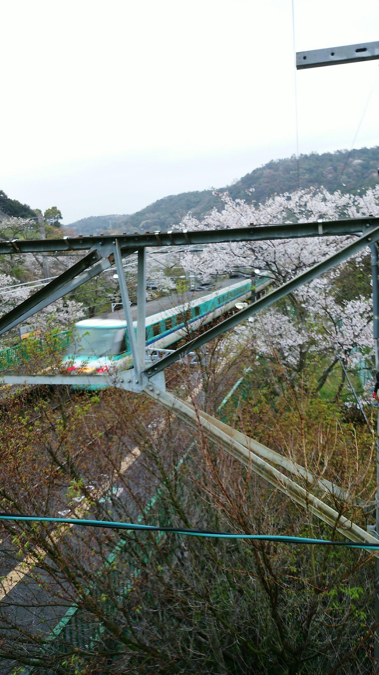 2015-4-4 Hello World Sakura Trees Hanami Charry Flowers Railway Station Public Transportation Osaka Japan Trains Ltd.express Kuroshio Type 381 Ultimate Japan