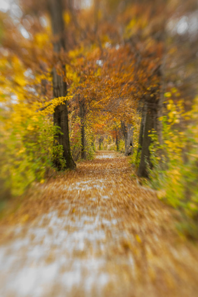 Autumn Beauty In Nature Blur On Purpose Change Diminishing Perspective Fall Fall Beauty Fall Leaves Focus On Background Footpath Leading Leading Lines Lensbaby  Lensblur Motion Motion Blur Nature November October Outdoors Season  Selective Focus Speeding The Way Forward Tree