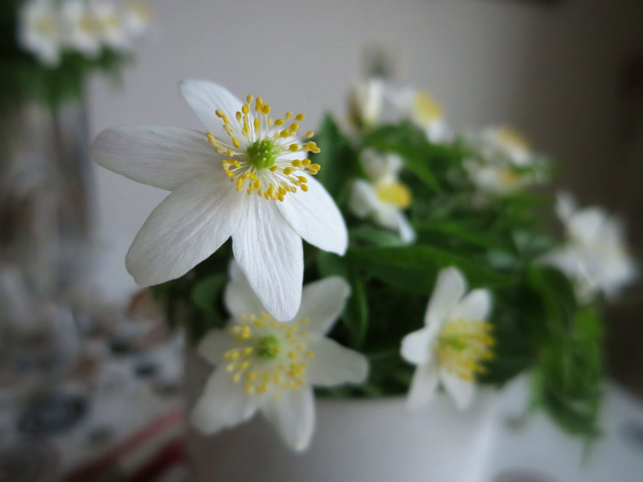 Wood anemone at mothers. Spring Indoor Spring Flowers Wood Anemone
