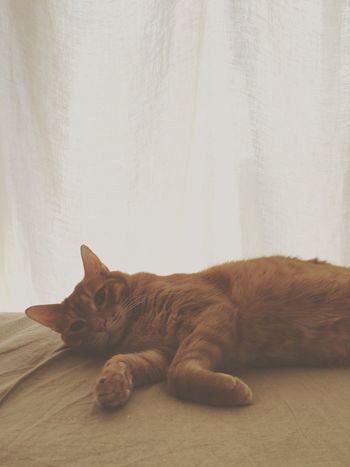 今日も平和な一日の始まり。 Cat