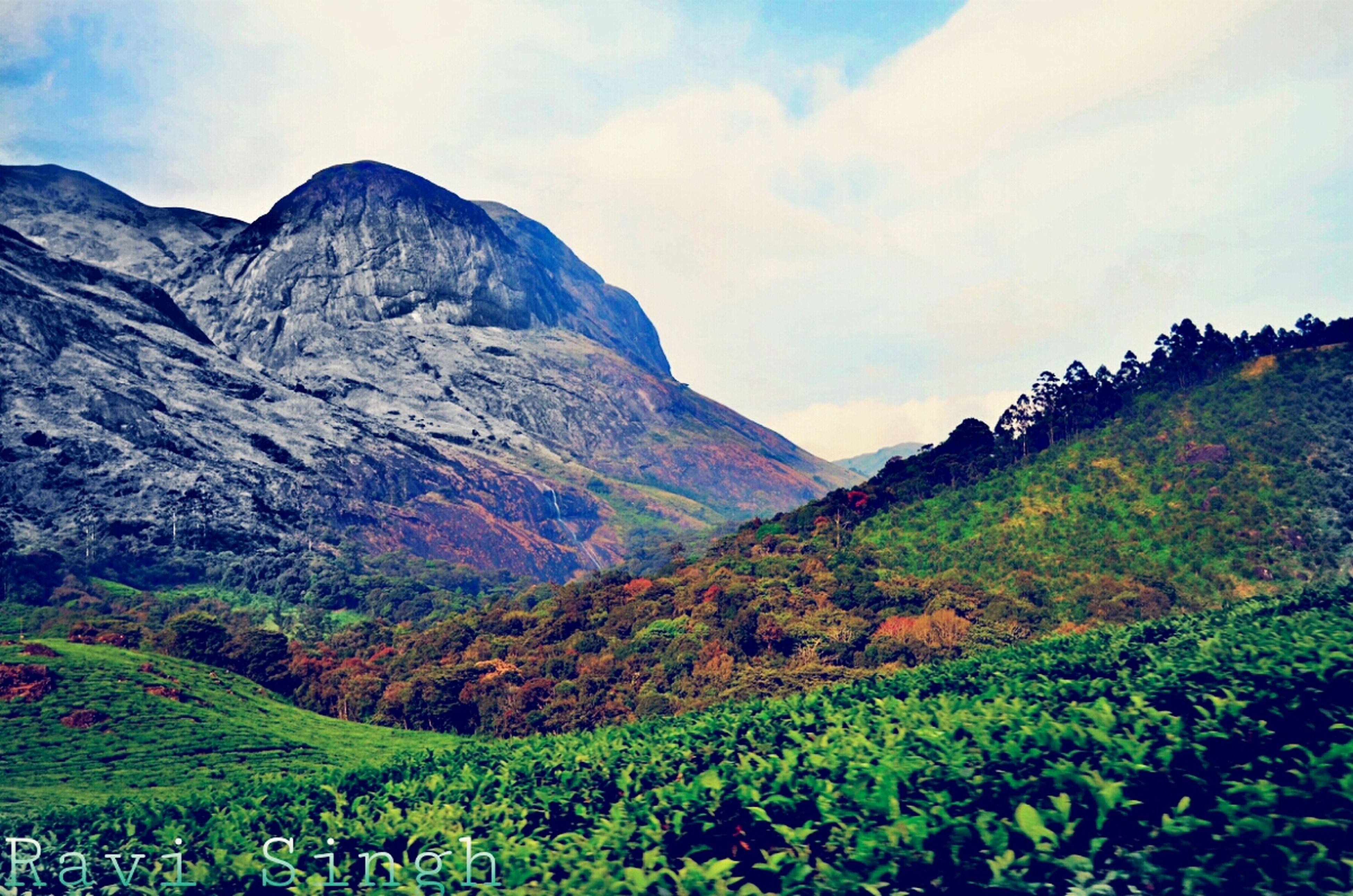 mountain, tranquil scene, tranquility, mountain range, scenics, beauty in nature, landscape, sky, nature, tree, non-urban scene, growth, idyllic, plant, cloud - sky, remote, day, outdoors, grass, green color