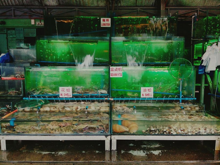 I'm looking at it in 2 perspectives - sea creatures and sea food. I love seafood but I can't help thinking about their state. Hmm, but yeah, this is nature. Seafood Seacreatures Food Dampa Fresh