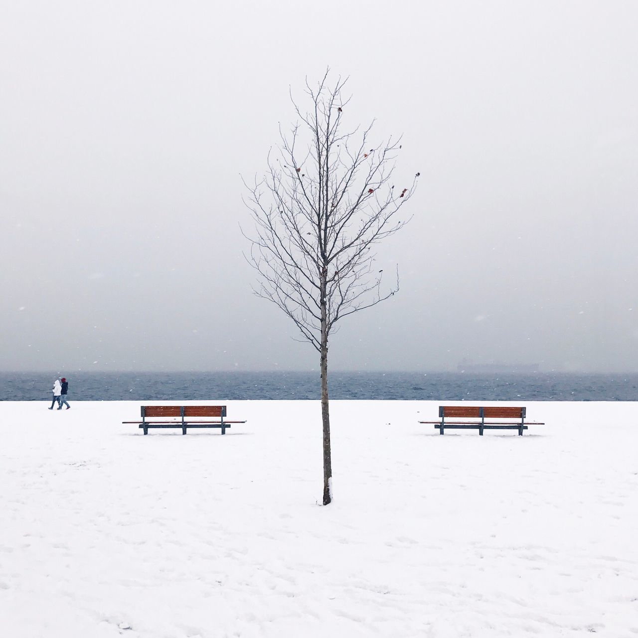 Winter Cold Temperature Snow Nature Bare Tree Weather Beauty In Nature Tranquility Tranquil Scene Tree Branch Outdoors Scenics Frozen No People Sky Day Water
