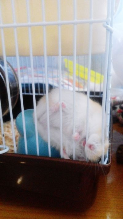 My Pet Hamster (´ω・`) Hhhhh Are You Ok?