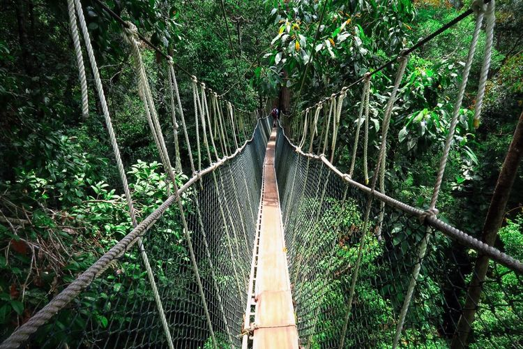 Canopy walk in Taman Negara tropical forest, Malaysia Rope Bridge Tree Connection Forest Green Color Hanging Growth Nature No People Bridge - Man Made Structure Outdoors Bamboo Grove Day Tree Area