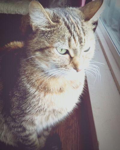 Cat Animals Isolated Isolated Photograph EyeEmNewHere EyeEmNewHere