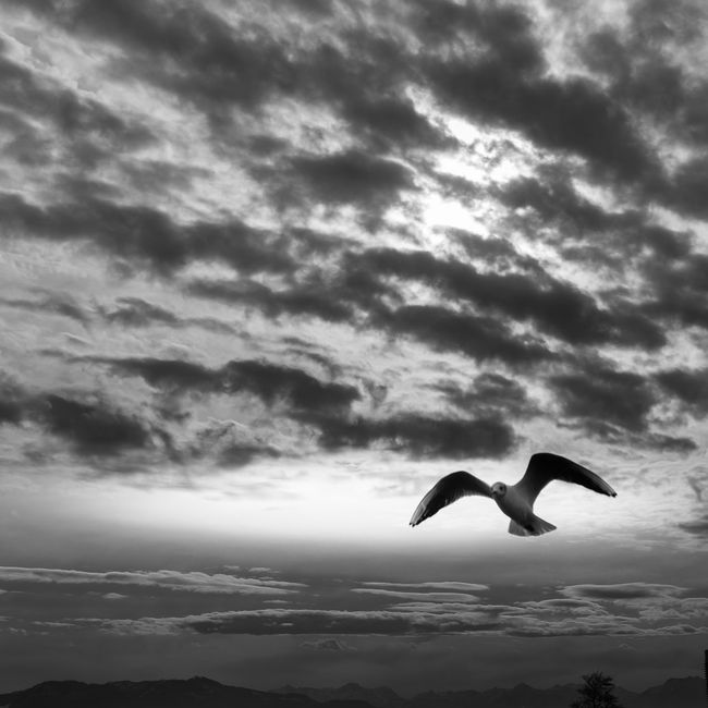 Seagull to ground control / with my Canon Avian Beauty In Nature Bird Cloud Cloud - Sky Cloudy Color Palette Fineart Flying Freedom Home Is Where The Art Is Idyllic Low Angle View Mid-air Nature No People Outdoors Scenics Seagull Sky Spread Wings Tranquil Scene Tranquility Weather Wildlife