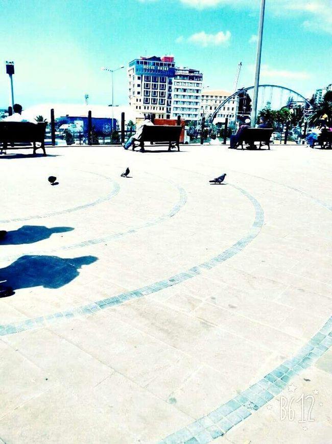 😊😊Streetphotography Pleasant Birds Goodday LoveThem  Taking Photos Summertime