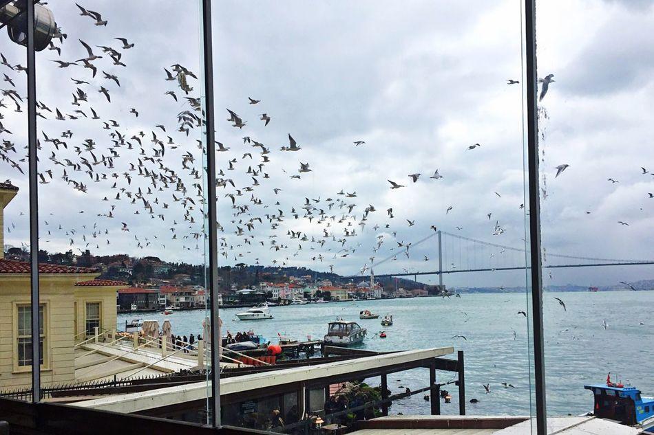 The City Light Windows Sea Flock Of Birds Low Angle View Through The Window Travel City Harbor