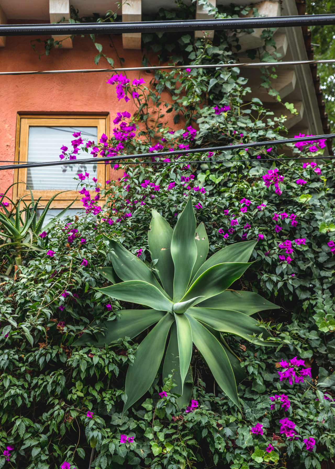 Abstract Abstract Photography Agave Architecture Beauty In Nature Building Exterior Built Structure City Composition Day Flower Flowers Fragility Freshness Growth Landscape Modern Modern Architecture Nature Nature Photography Outdoors Plant San Angel Street Streetphotography Art Is Everywhere