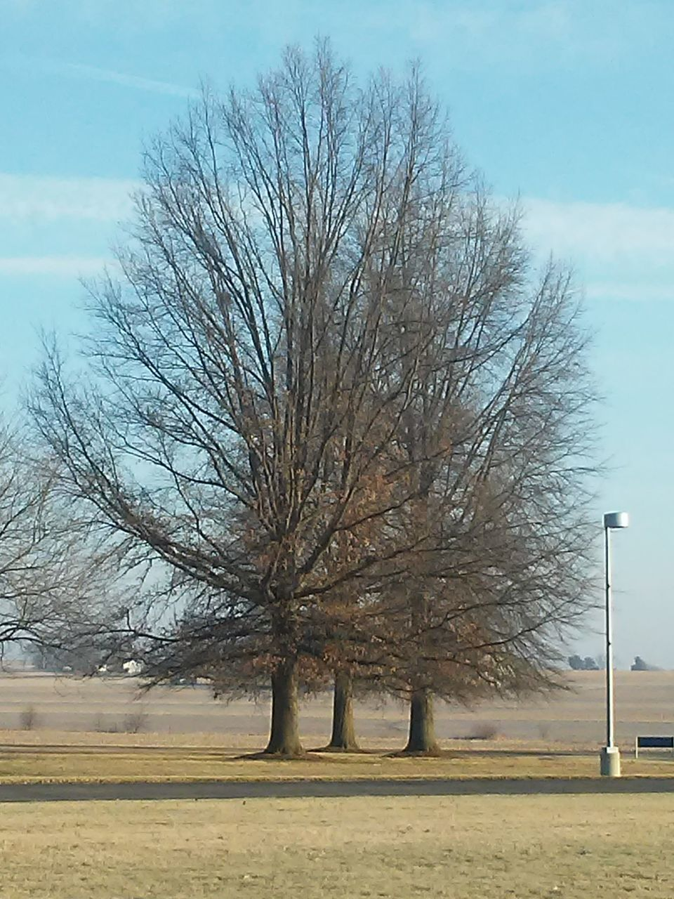 bare tree, tree, tranquility, sky, landscape, day, nature, beauty in nature, outdoors, lone, no people, scenics, branch