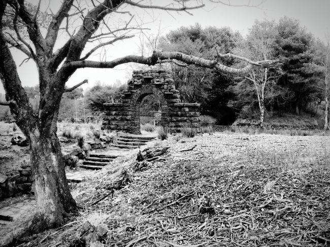 Tree Stone Stone Wall Arch Doorway Steps China Garden at Rivington