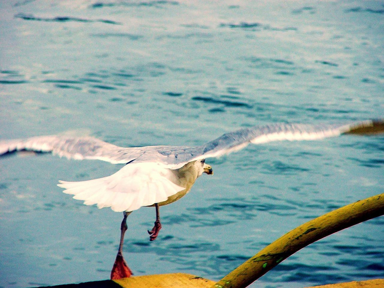 3...2...1...Go! Bird Animal Themes Animals In The Wild Nature Water Spread Wings No People Animal Wildlife Sea Outdoors Beauty In Nature Day Seagull Start Startup EyeEm Nature Lover
