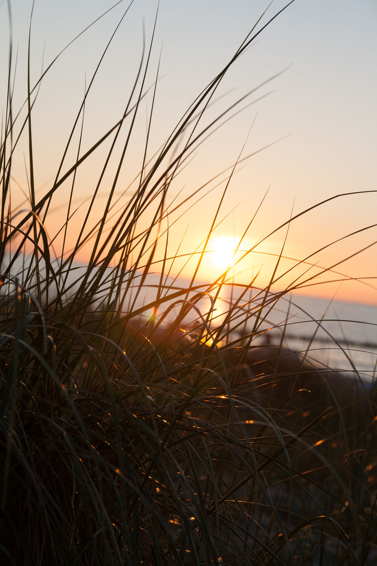 Sunset Baltic Sea Beauty In Nature Close-up Day Field Grass Growth Landscape Nature No People Ostsee Outdoors Plant Rural Scene Scenics Sea Sky Sun Sunlight Sunset Tranquil Scene Tranquility Water
