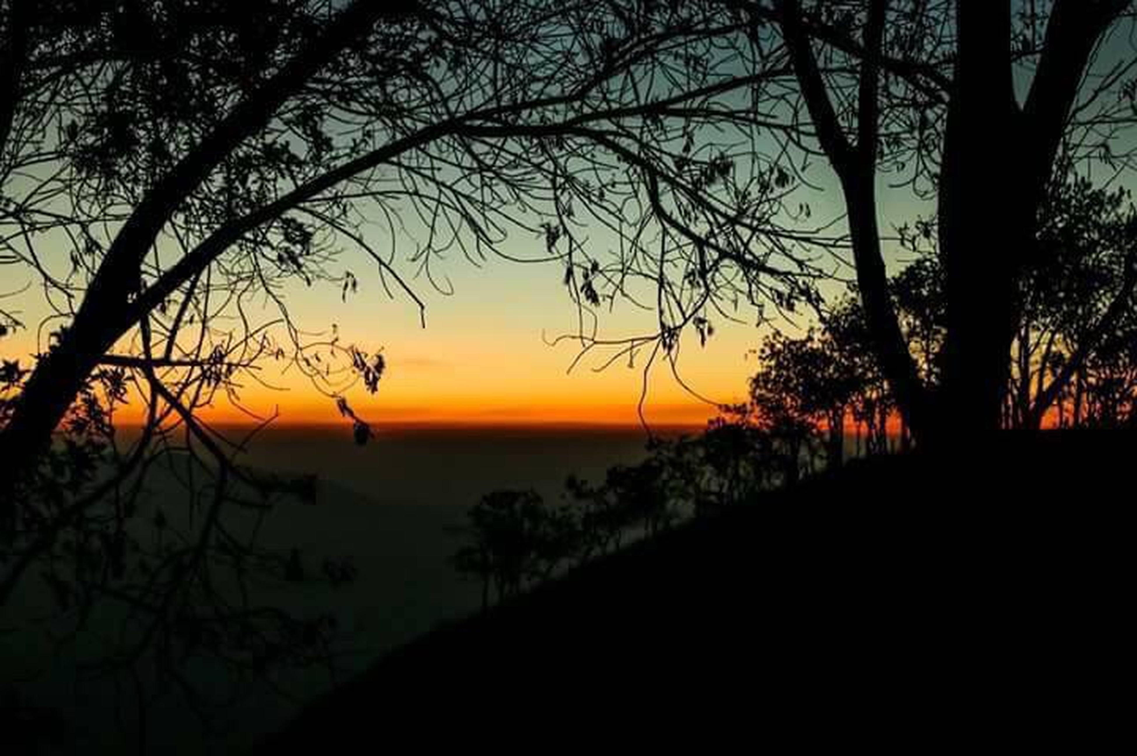 sunset, tree, nature, beauty in nature, scenics, sky, outdoors, tranquility, branch, tranquil scene, no people, sun, landscape, water, day