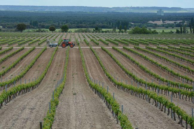 Vine vineyard tractor agriculture nature beauty landscape plants sky clouds cloudy