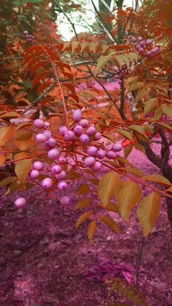 Fine Art Photography Flowers,Plants & Garden Wild Berries Monochromatic Monochrome_life Monoart Forest Berries