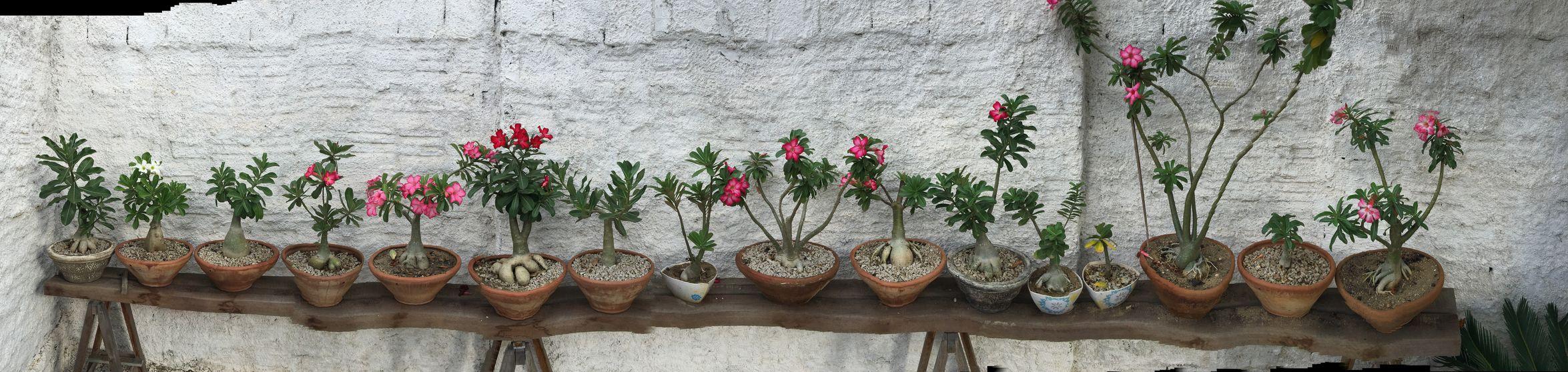 Flower Flowers,Plants & Garden Desertflower Flower Photography Nature