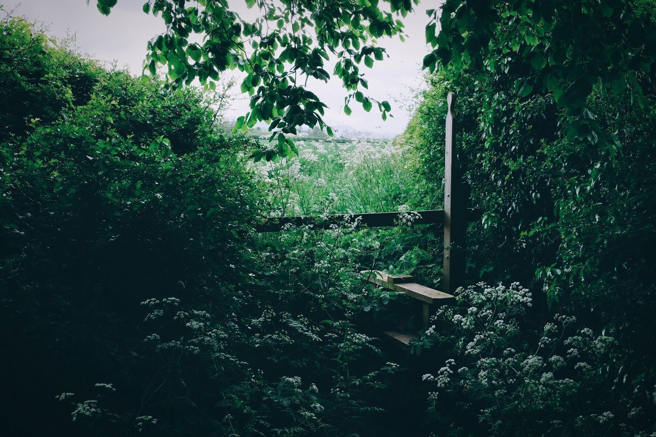 The Great Outdoors - 2017 EyeEm Awards Growth Nature Green Color Tree Plant Lush Foliage Beauty In Nature Outdoors No People Scenics Sky Day Tranquility Eyeemphotography EyeEm Gallery Taking Photos Eye4photography  BYOPaper! Leaf