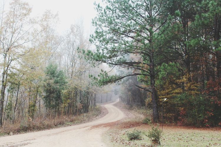 Fog Tree Road Nature Outdoors Sky No People Cold WeatherDay Foggy Sunrise Foggymornings No People Landscape Dreary Can Be Beautiful Cloudy Day Landscape Tranquility Forest Growth Scenics Beauty In Nature