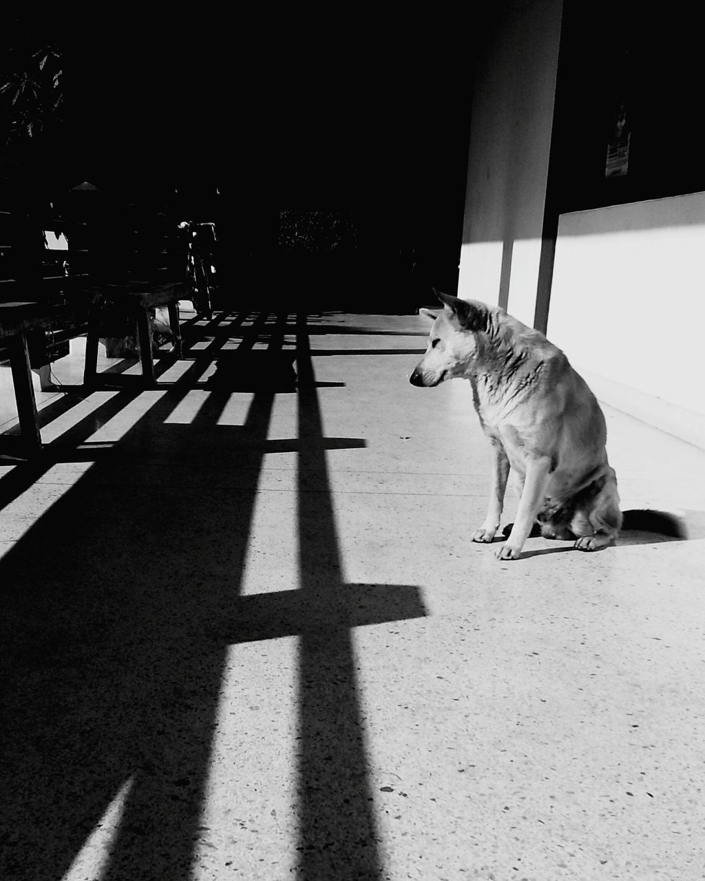 pets, animal themes, domestic animals, one animal, mammal, shadow, sunlight, domestic cat, dog, feline, day, no people, sitting, outdoors