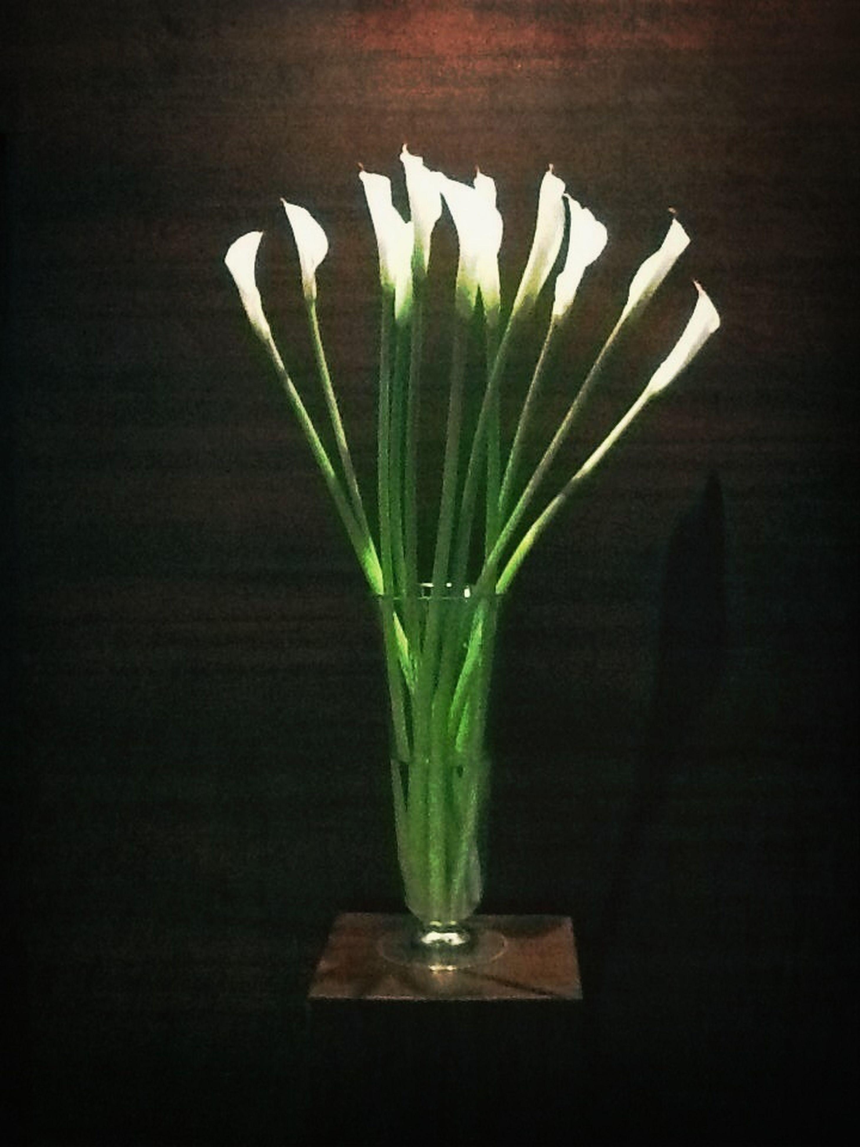 indoors, table, vase, flower, freshness, still life, fragility, close-up, studio shot, glass - material, home interior, decoration, black background, flower arrangement, stem, leaf, flower head, petal, plant, no people
