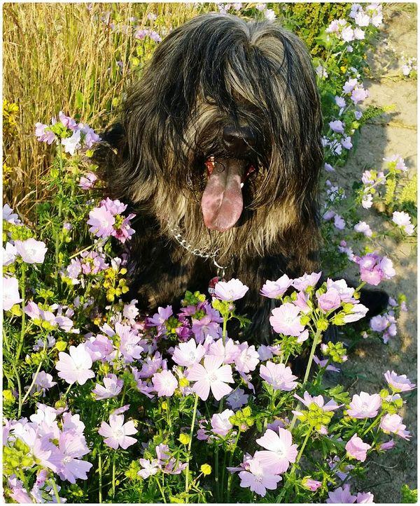 Bentjesgosaugustin Nature Flowers Gos D'atura Ilovemydog Mydog Dog Walking I Love My Dog Summer Dog