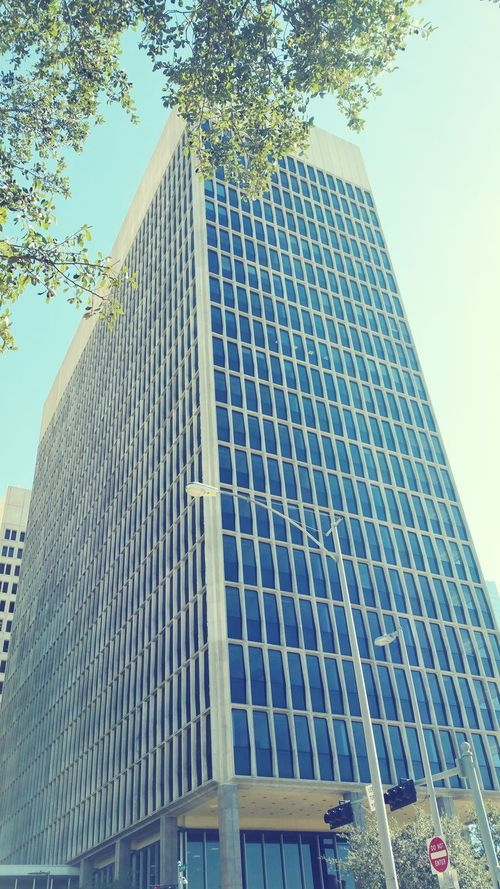 Always happy to get a few new Houston Texas shots. Low Angle View Architecture City Tree Building Exterior Skyscraper Sky Clear Sky Modern Outdoors Photos On The Street Popular Photos Houston Texas Downtown Photography EyeEm Gallery EyeEm Best Shots