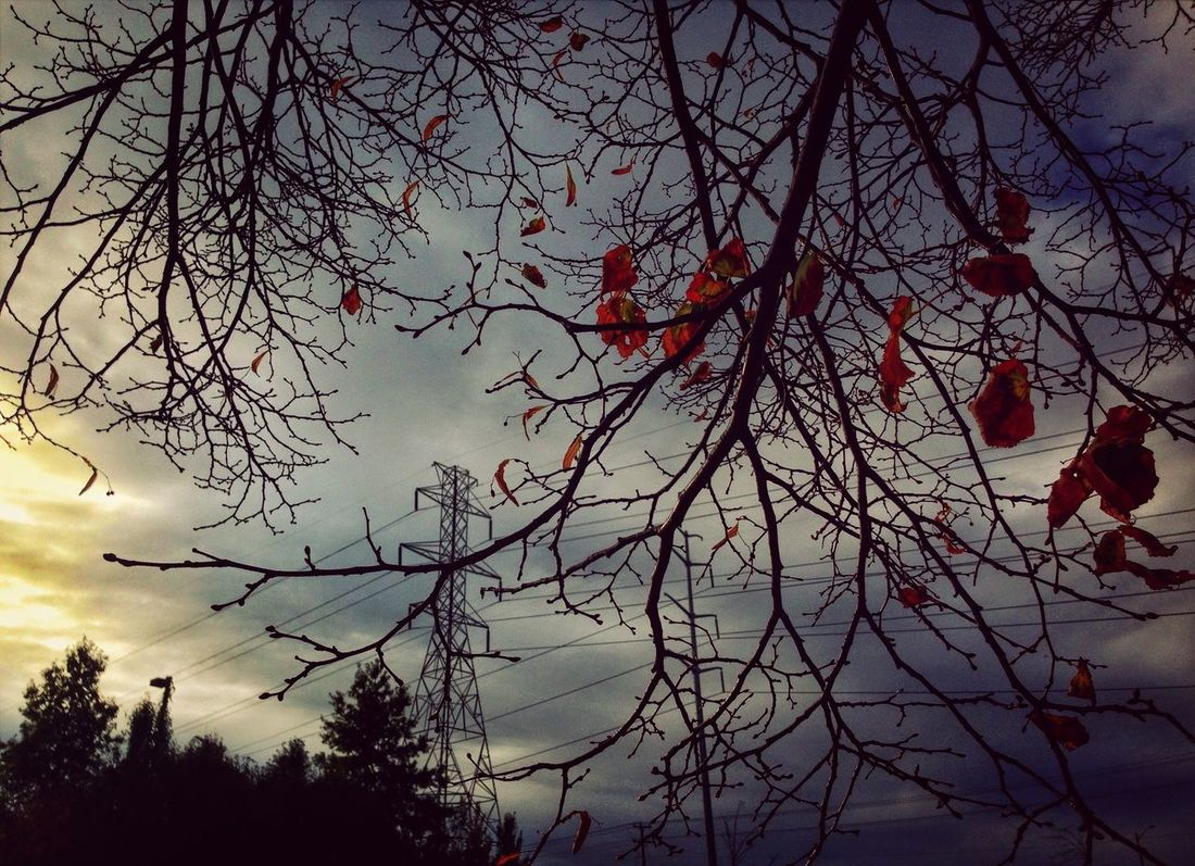 Under the wire Wires Autumn Branches Chilling