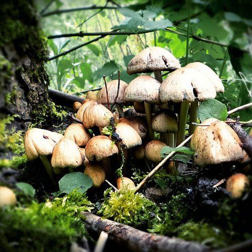 Mushroom Mushrooms Mushroomhead Gomba Hungary Magyarország Mik Ikozosseg Naturelovers Nature Nature_perfection Ptk_nature Ptk_nature_forest Ptk_nature_challenge