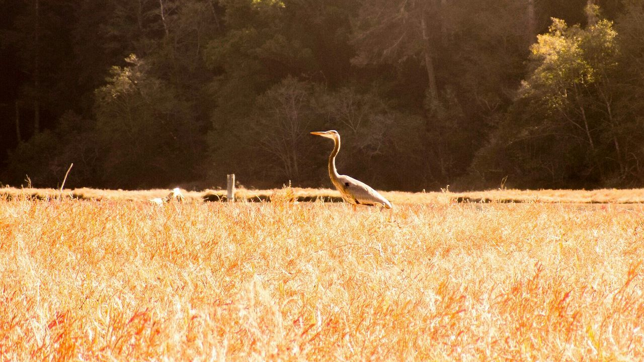 Bird Bird Photography Fall Beauty Fall Colors Landscape Landscape_photography Nature California Fortbragg Medicino Fishing Trip Goodtime Novemberphotochallenge November2015 November Ocean Fishing Meadow
