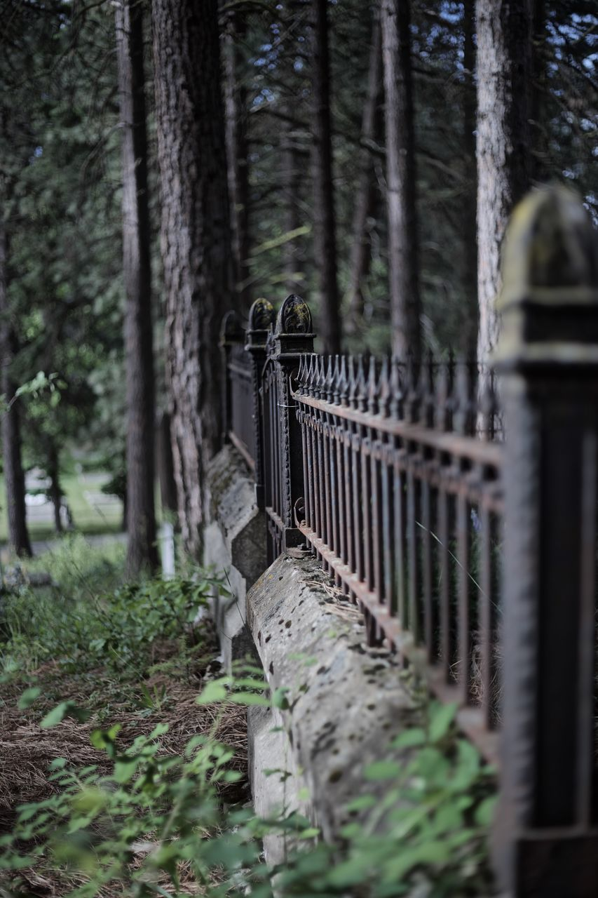 selective focus, railing, day, no people, tree, outdoors, nature, close-up