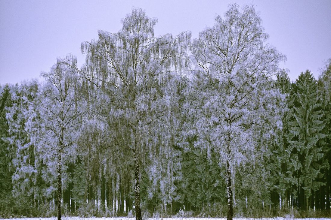 erster Frost Beauty In Nature Frost Frosty Nature No People Schwabenland Tree Wintertime Wintertrees