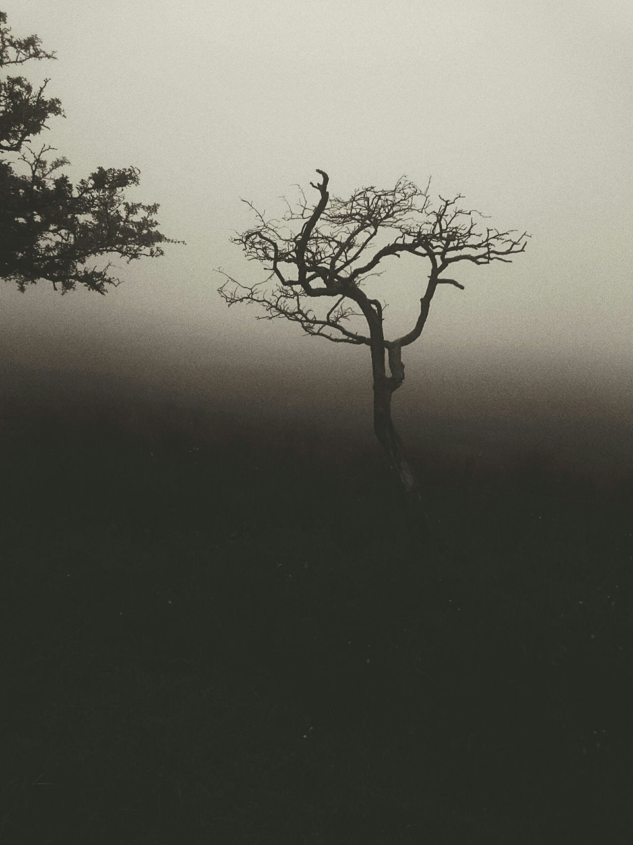 Fog In The Trees Fog_collection Foggy Weather Foggy Night Northern Ireland Blackmountain