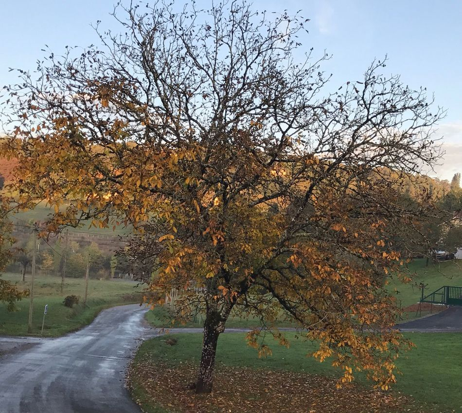 Tree Autumn Nature Beauty In Nature Branch No People Tranquility Rainy Days France Perigord Change Scenics Landscape Melancolic Petite promenade au cœur de la campagne périgourdine ❤️❤️❤️