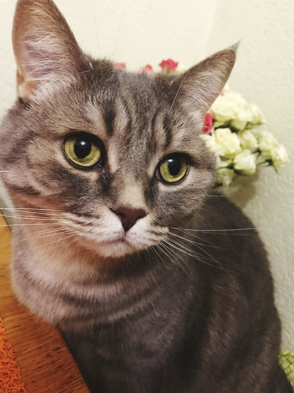 domestic cat, pets, domestic animals, feline, mammal, animal themes, whisker, one animal, cat, looking at camera, portrait, indoors, no people, close-up, flower, home interior, day